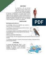 Anatomia, Morfologia, Citologia, Histologia, Embriologia, Ecologia, Apicultura, Pisicultura