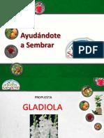 Presentacion Gladiola