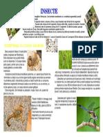 proiect insecte