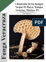 guia Ilustrada de los hongos del parque el Haya_iv Xalapa, Veracruz, Mexico.Funga Veracruzana 160.
