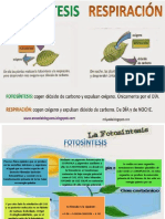 fotosintesisyrespiracioncelular-140520082345-phpapp02