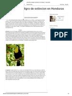 Animales en Peligro de Extincion en Honduras _ Marzo 2015