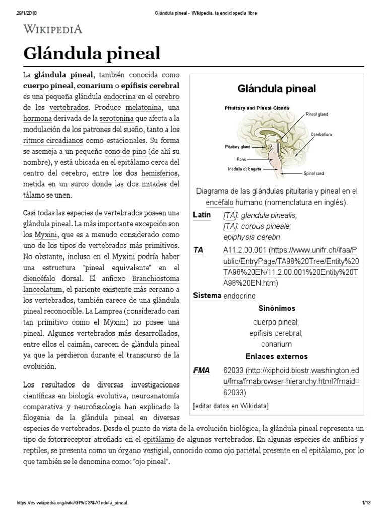 Glándula Pineal - Wikipedia