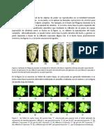 notas_cristalografia_gemologia_justif.docx
