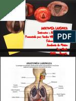 Anatomia Laringea (3)