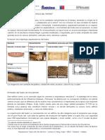 A.2.Estudio Tipologico