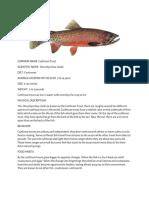 fish info