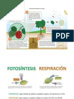 Funciones de Las Plantas Sin Semilla