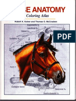 Kainer, McCracken - Horse Anatomy. a Coloring Atlas - 1998