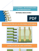 Medula Espinal