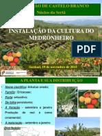 1_Instalacao_medronho