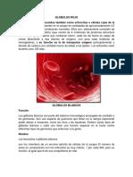 Globulos Rojo