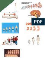 Imagenes de Trabajo Biologia Desarrollo y Crecimiento.