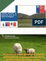 MODULO IV 1 Genetica Ovinos de Carne