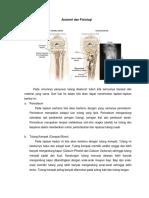 Anatomi Dan Fisiologi Tulang