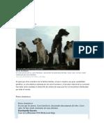 razas de perros.docx