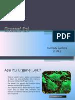 Organel Sel (adi).pptx