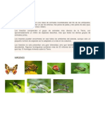 INSECTOS.docx