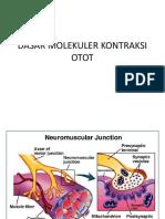 Dasar Molekuler Kontraksi Otot