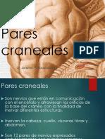 08 Pares Craneales