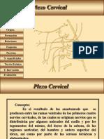 12 Plexo Cervical