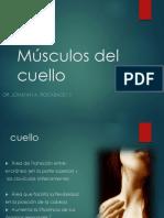 09 Musculos Del Cuello