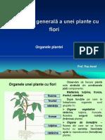 lectie5_alcatuireageneralaauneiplantecuflori.radacina..ppt