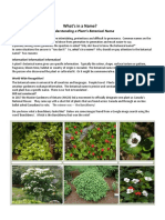whats in a name 6 pdf  publish version