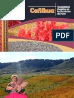 Variabilidad_genetica_cañihua_puno.pdf