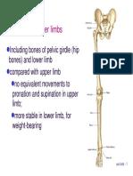 Bone Limb Lower