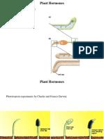Plant Hormones Summary