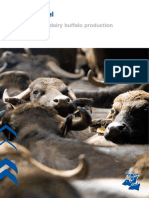 Efficient-dairy-buffalo-production.pdf