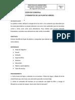 3.-Extracción-de-clorofila