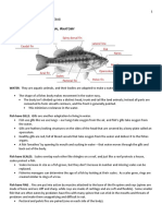 What Makes a Fish and Fish Anatomy
