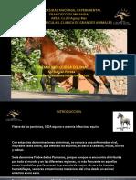 AIE EQUINA2.pdf