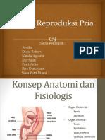 Kelompok Sistem Reproduksi Pria