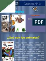 Animales MAdai 2016