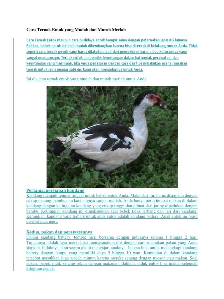 Kumpulan Soal Pelajaran 4 Mewarnai Bebek Bertelur
