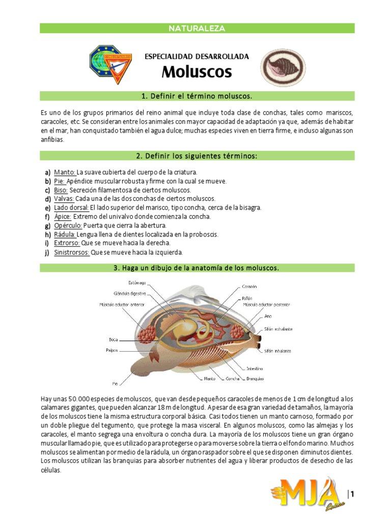 Excelente Anatomía Del Caracol Galería - Anatomía y Fisiología del ...