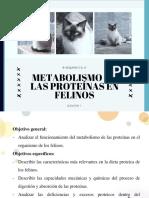 Infor Bioqui TRI