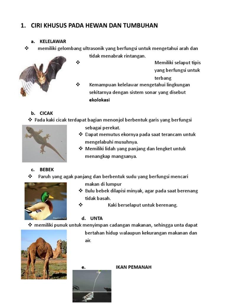 101 Gambar Ayam Bebek Ikan Cicak Terbaik