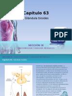Raff Fisiologia Figuras c63 Tiroides
