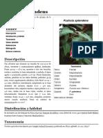 Fuchsia splendens.pdf