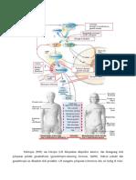 137539784-Hipogonadisme.doc