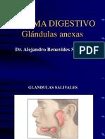 Sistema Digestivo-glandulas Anexas