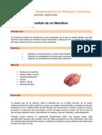Practica 7.- Diseccción Cerebro