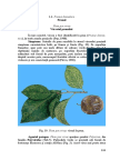 prunul.pdf