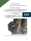 paduri_foioase.pdf