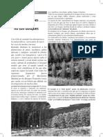 Las plantaciones de árboles no son bosques - copia.pdf
