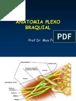 Anatomia Do Plexo Braquial